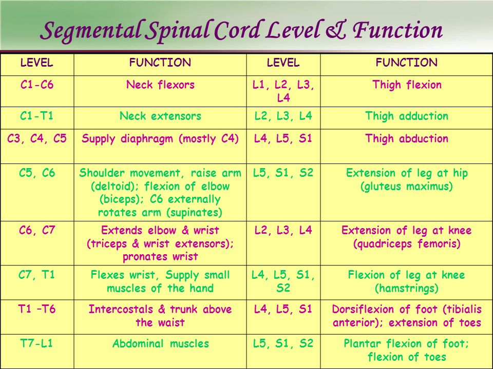 Segmental Spinal Cord Level & Function