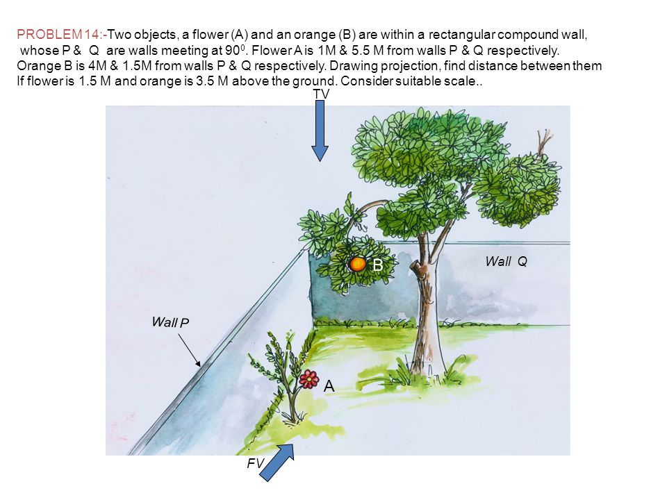 PROBLEM 14:-Two objects, a flower (A) and an orange (B) are within a rectangular compound wall,