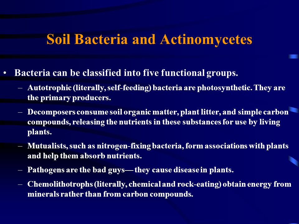 Soil Bacteria and Actinomycetes