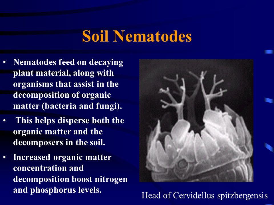 Soil Nematodes