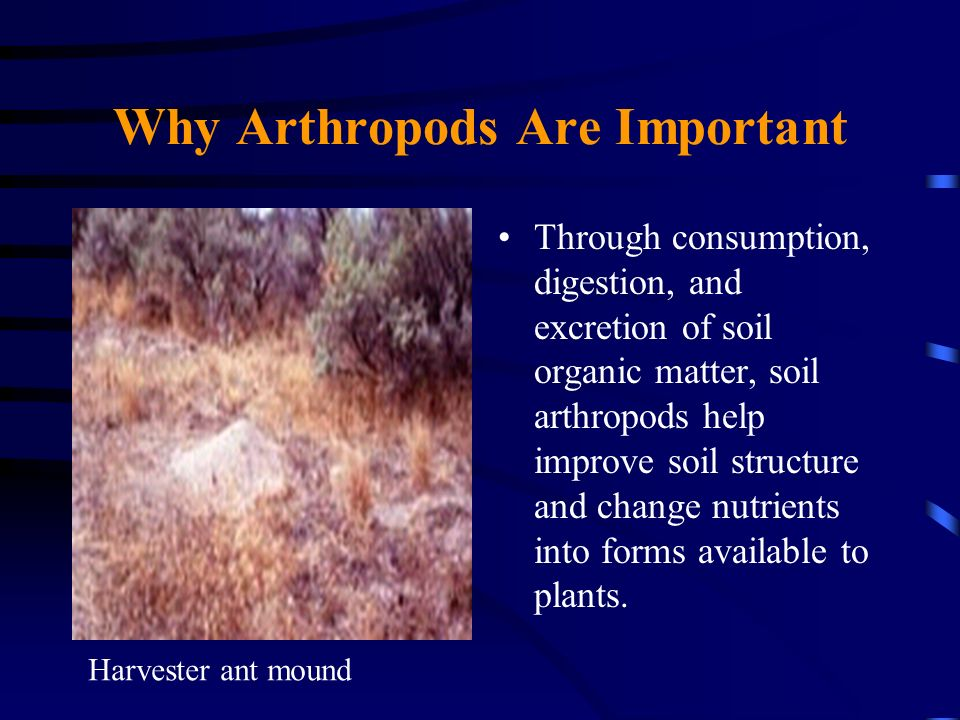 Why Arthropods Are Important