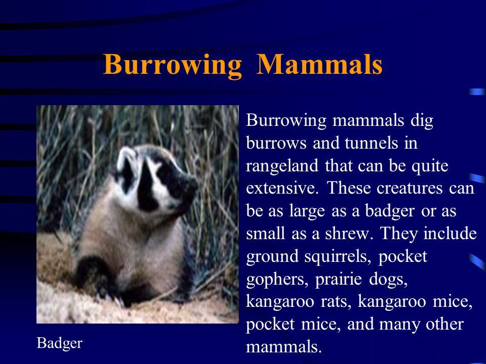 Burrowing Mammals