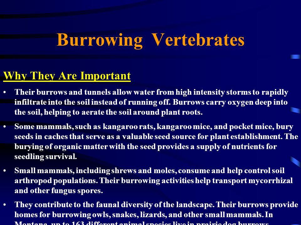 Burrowing Vertebrates