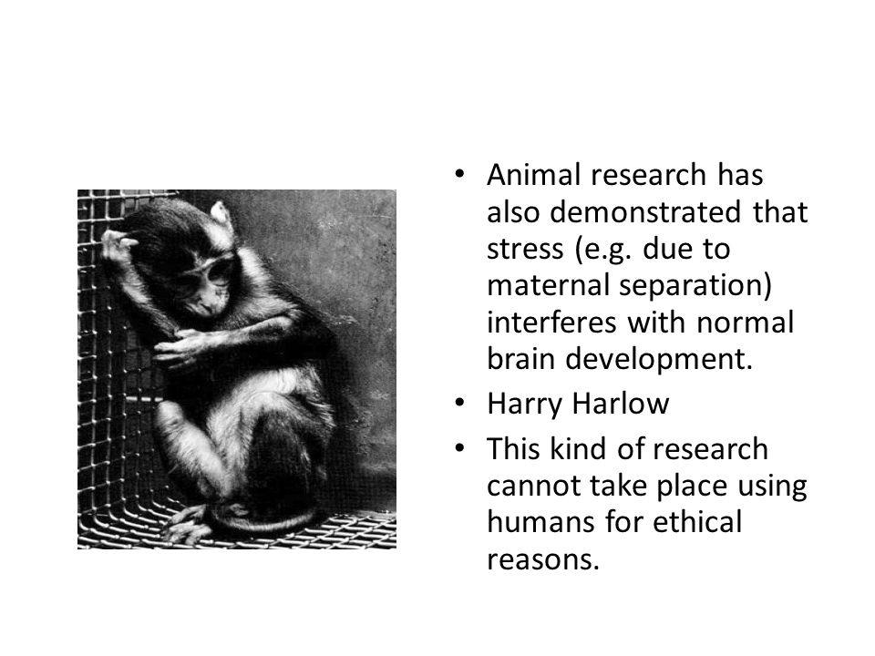 Animal research has also demonstrated that stress (e. g