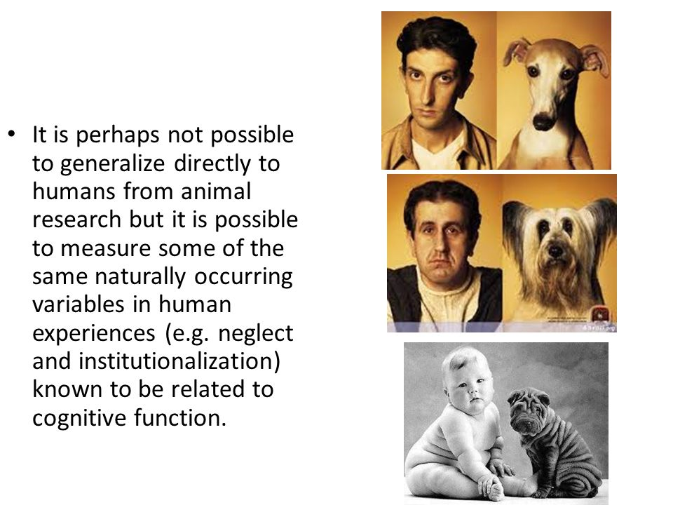 It is perhaps not possible to generalize directly to humans from animal research but it is possible to measure some of the same naturally occurring variables in human experiences (e.g.