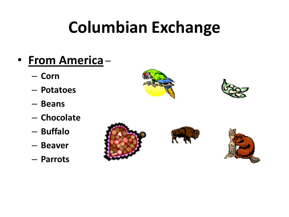 Columbian Exchange From America – Corn Potatoes Beans Chocolate