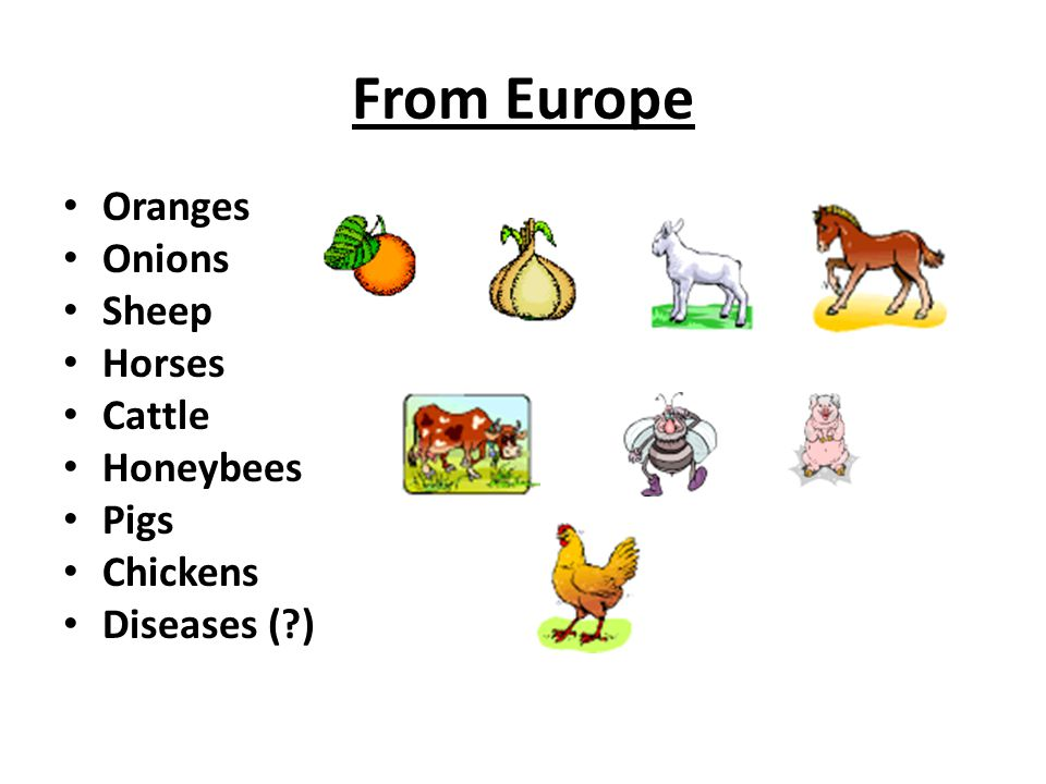From Europe Oranges Onions Sheep Horses Cattle Honeybees Pigs Chickens