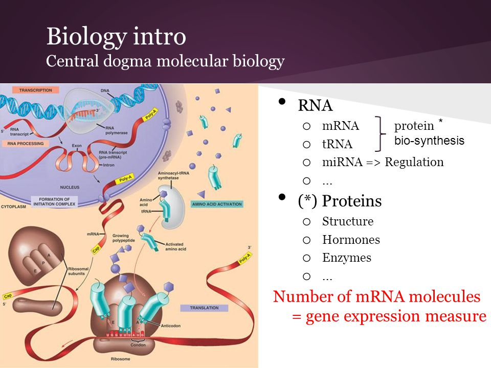 Biology intro Central dogma molecular biology