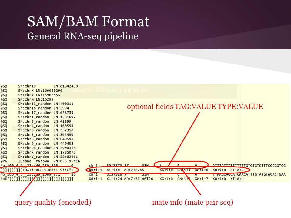 SAM/BAM Format General RNA-seq pipeline