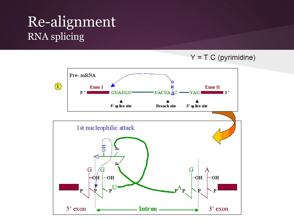 Re-alignment RNA splicing