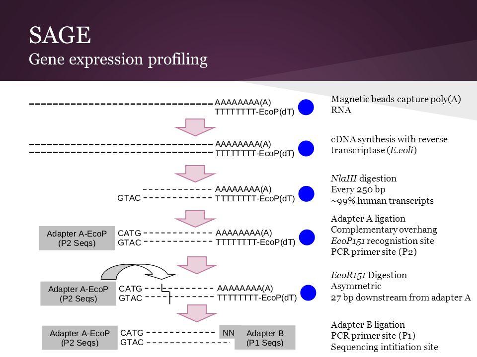 SAGE Gene expression profiling