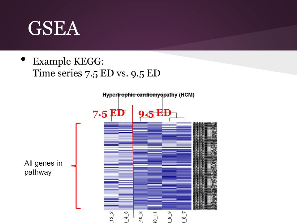 GSEA Example KEGG: Time series 7.5 ED vs. 9.5 ED 7.5 ED 9.5 ED