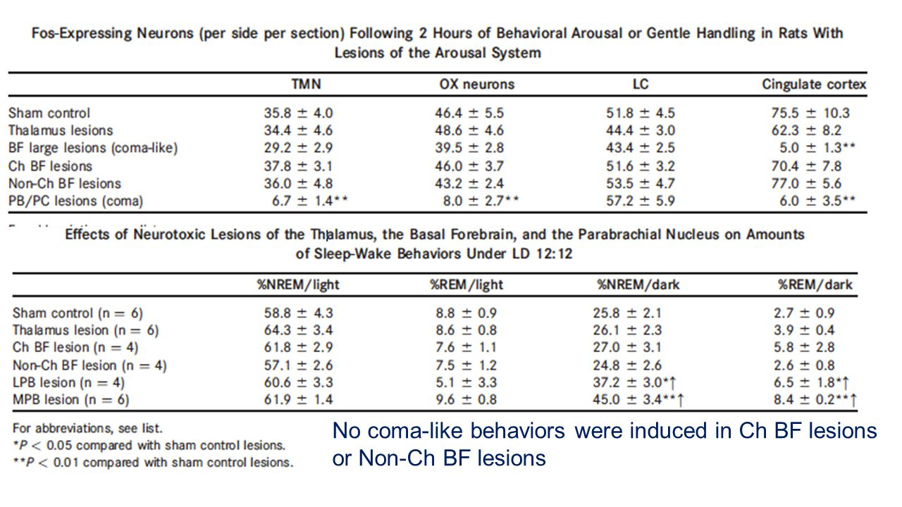No coma-like behaviors were induced in Ch BF lesions or Non-Ch BF lesions