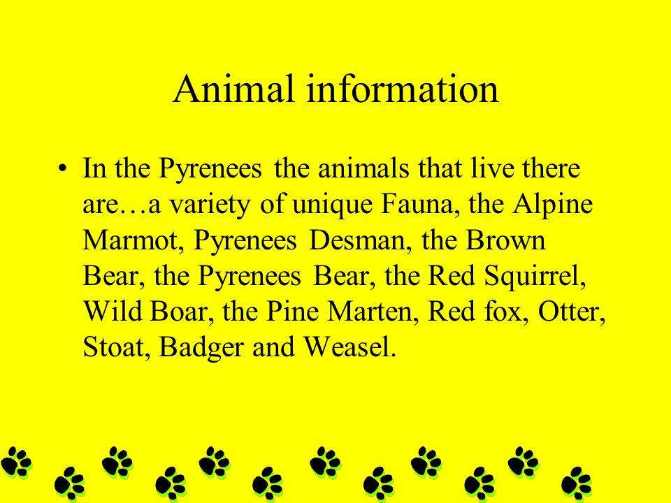 Animal information