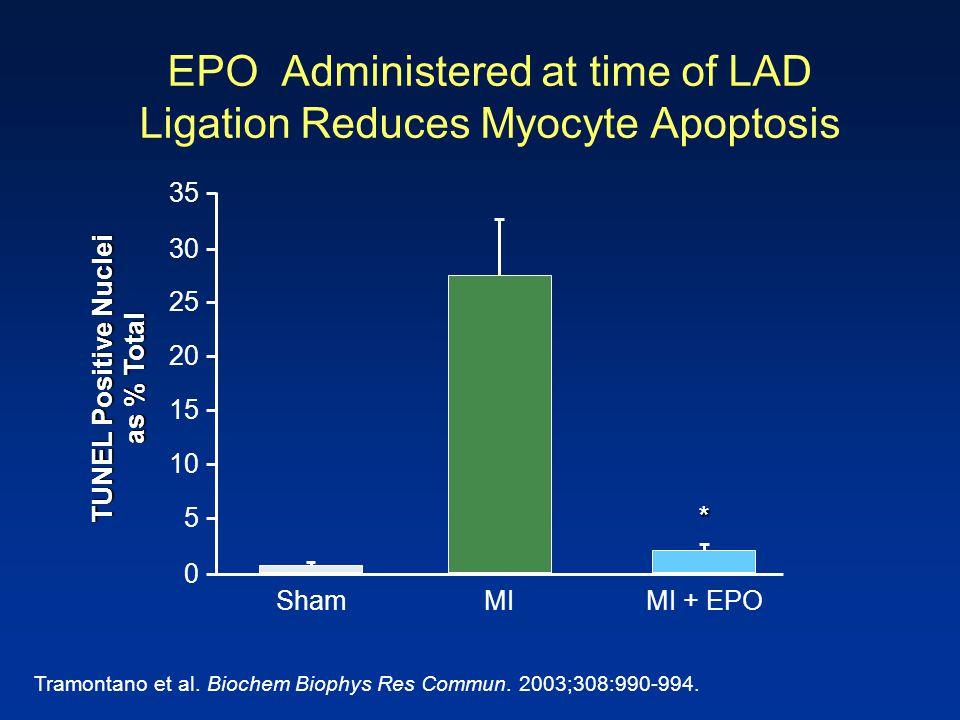 EPO Administered at time of LAD Ligation Reduces Myocyte Apoptosis