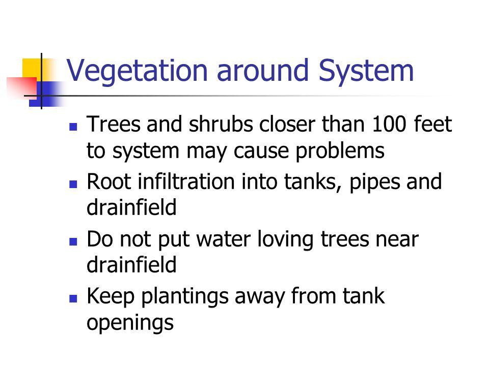 Vegetation around System