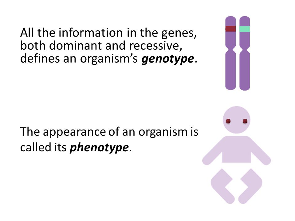 The appearance of an organism is called its phenotype.