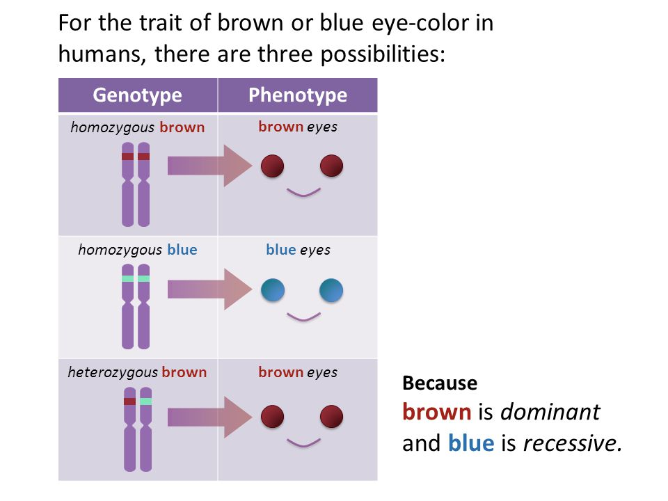 brown is dominant and blue is recessive.