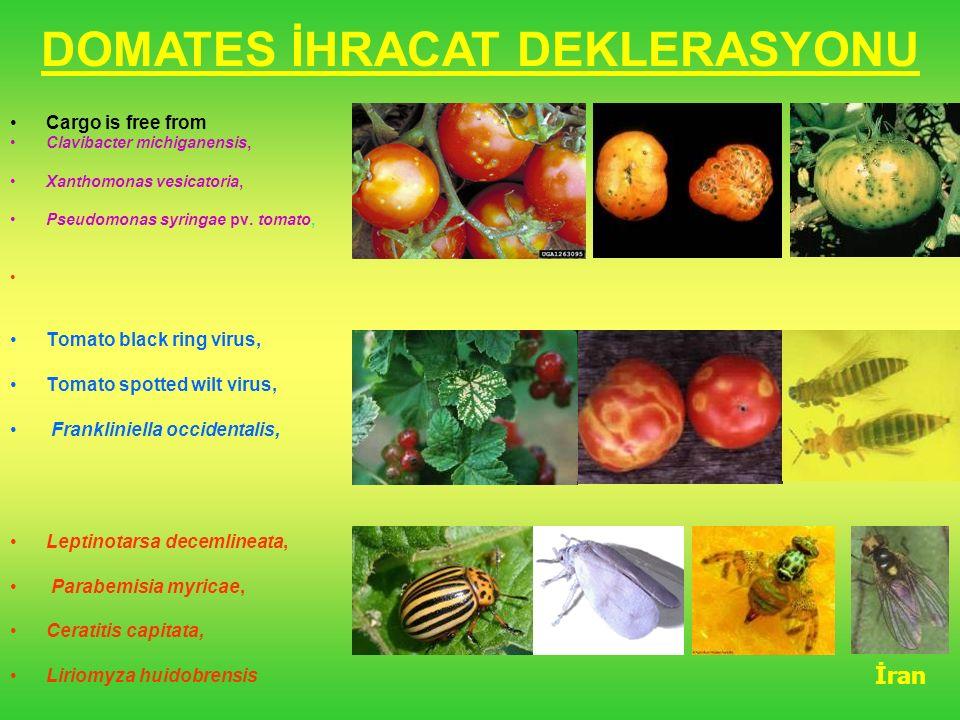DOMATES İHRACAT DEKLERASYONU