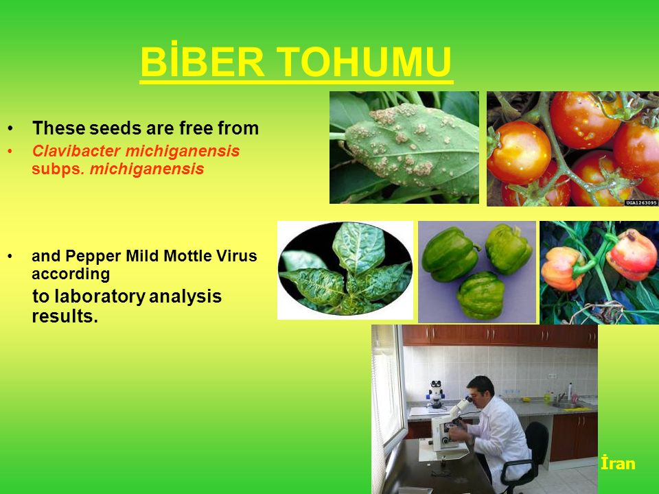 BİBER TOHUMU These seeds are free from to laboratory analysis results.