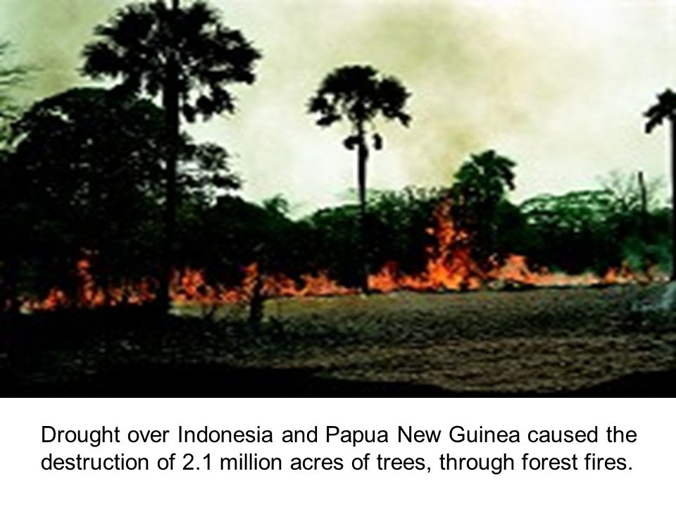 Drought over Indonesia and Papua New Guinea caused the destruction of 2.1 million acres of trees, through forest fires.