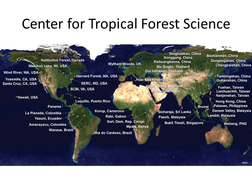 Center for Tropical Forest Science