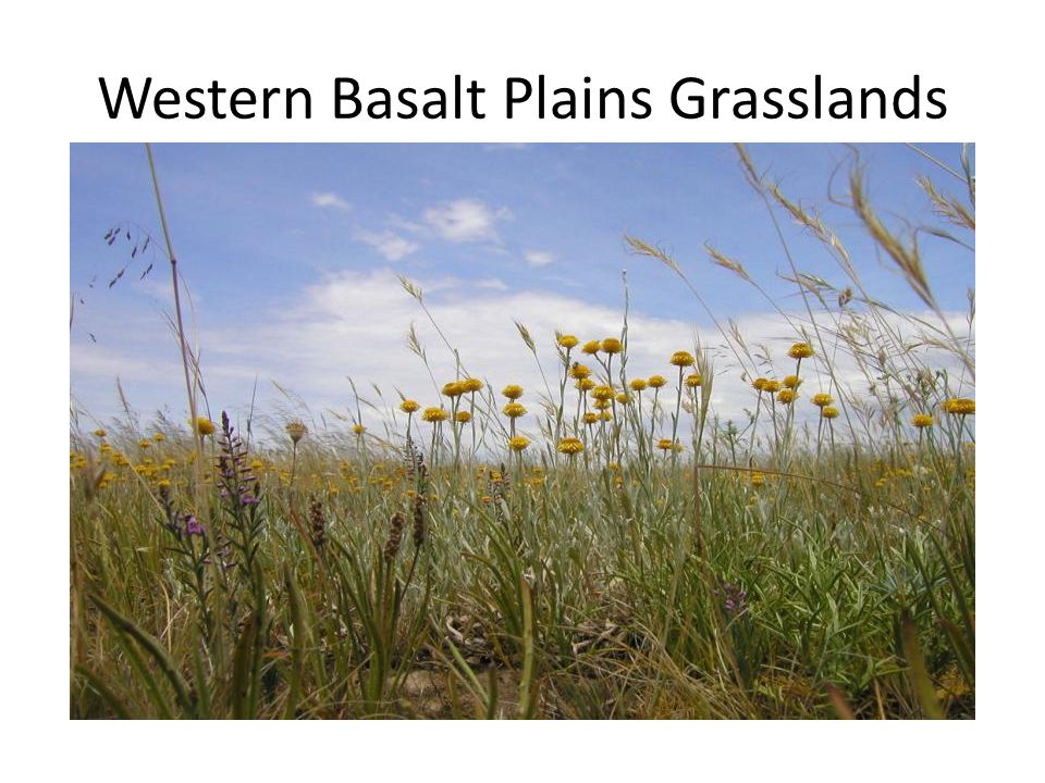 Western Basalt Plains Grasslands