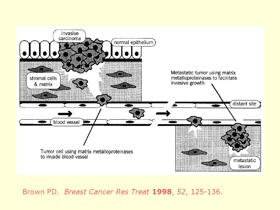 Brown PD. Breast Cancer Res Treat 1998, 52,