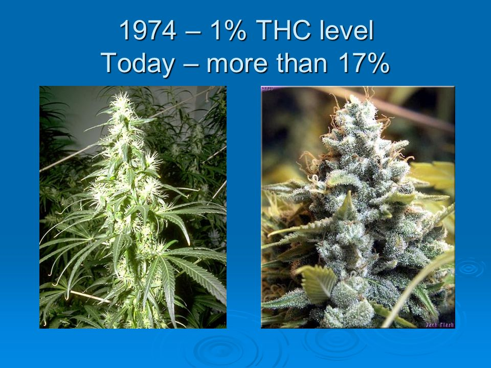 1974 – 1% THC level Today – more than 17%