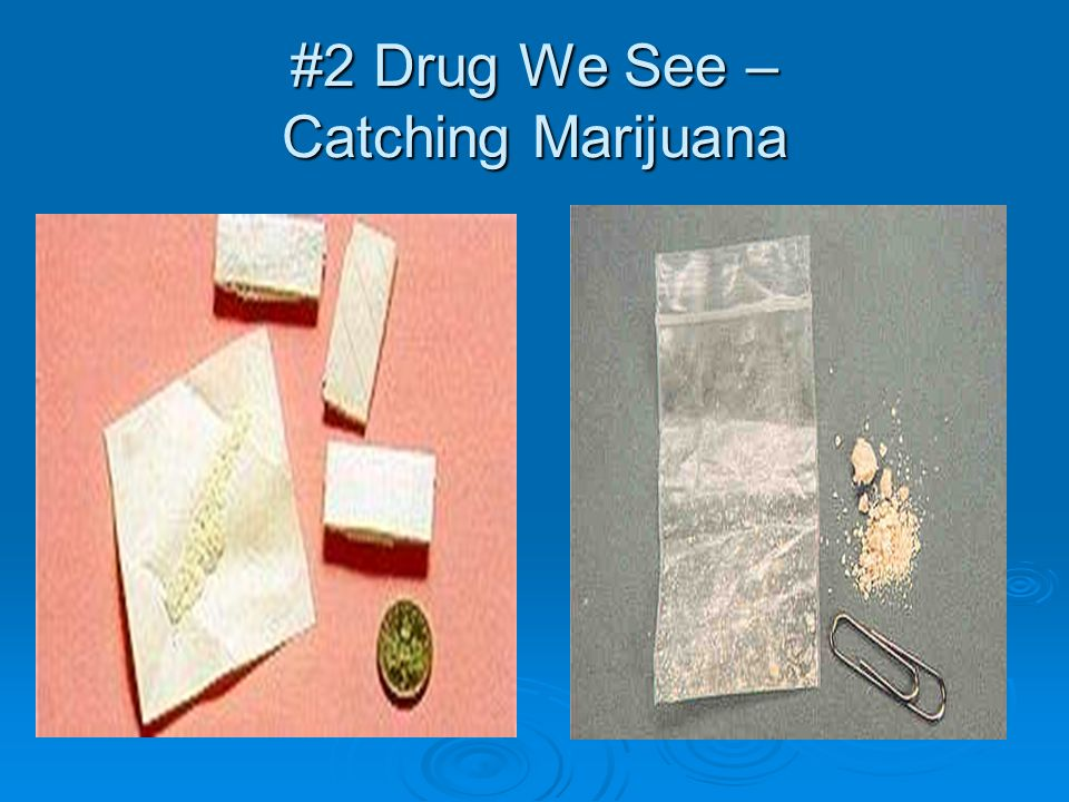 #2 Drug We See – Catching Marijuana