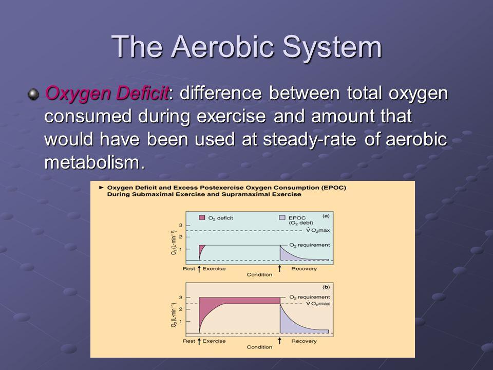 The Aerobic System