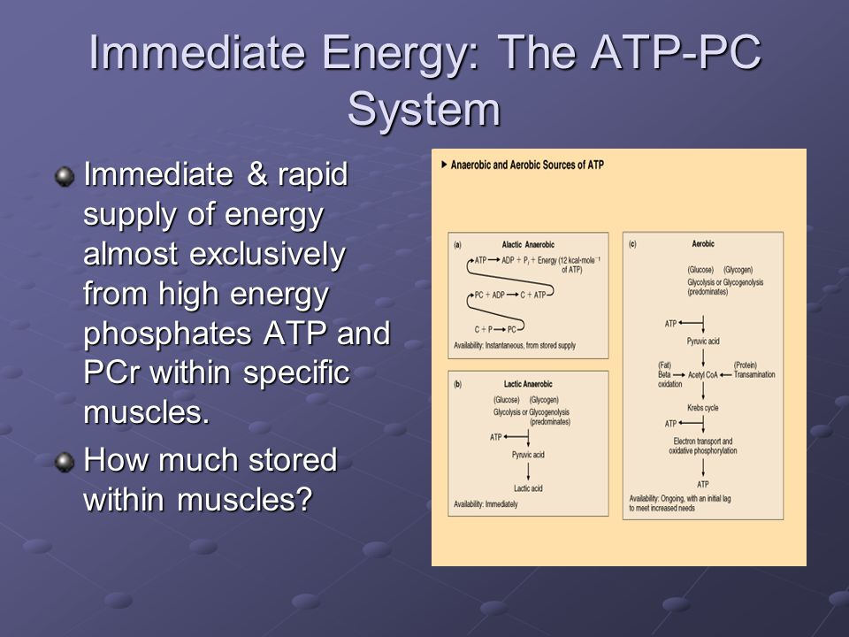 Immediate Energy: The ATP-PC System