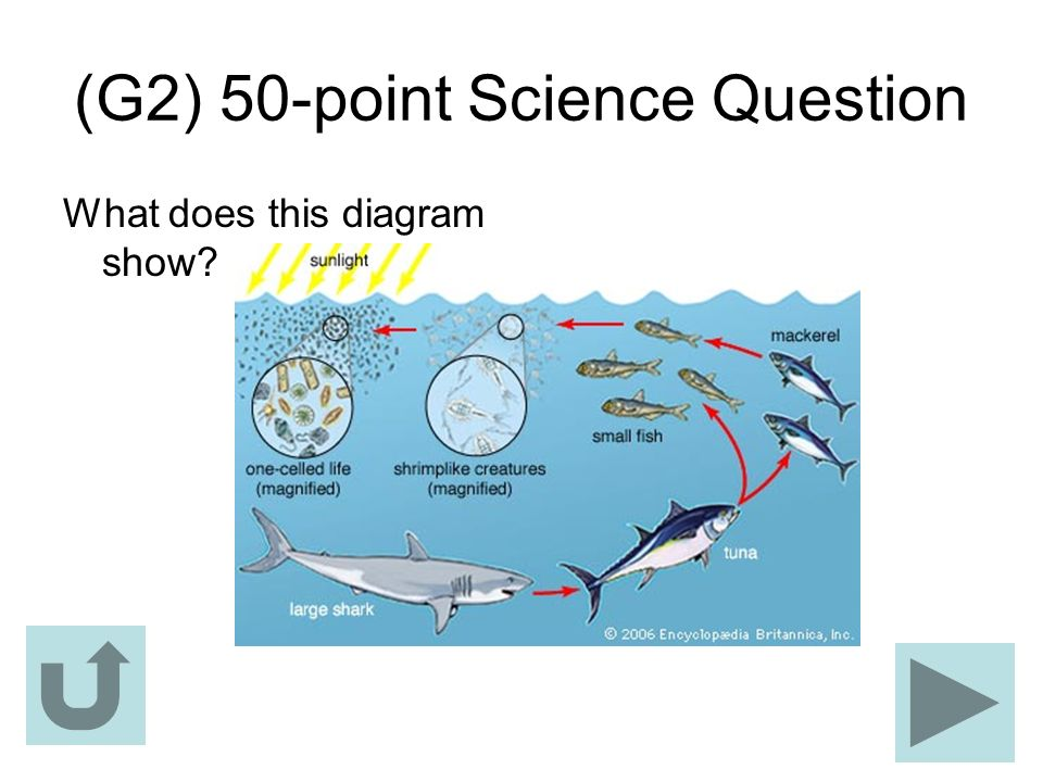 (G2) 50-point Science Question