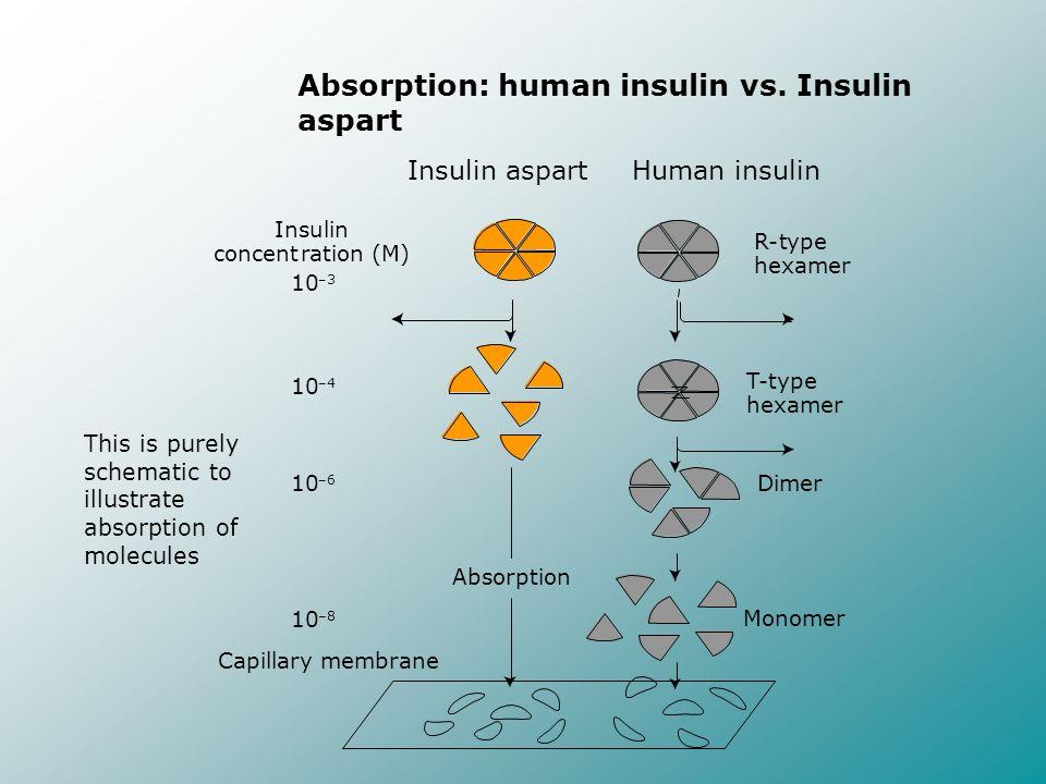 Absorption: human insulin vs. Insulin aspart