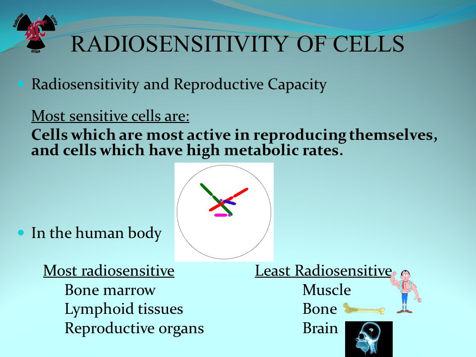 RADIOSENSITIVITY OF CELLS