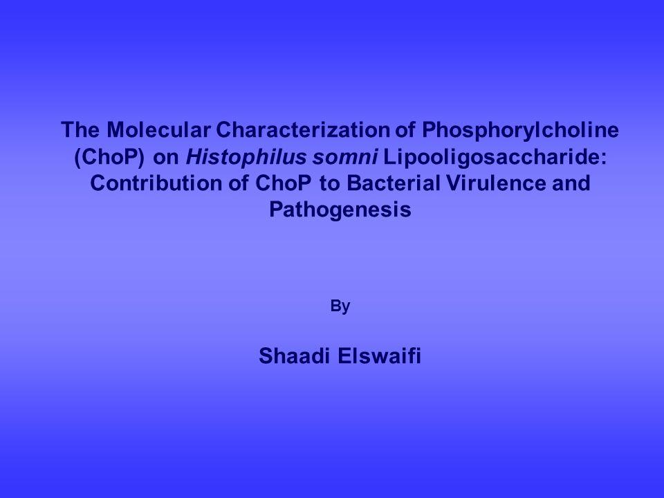 The Molecular Characterization of Phosphorylcholine (ChoP) on Histophilus somni Lipooligosaccharide: Contribution of ChoP to Bacterial Virulence and Pathogenesis