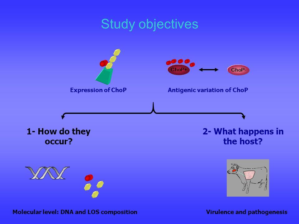 Antigenic variation of ChoP