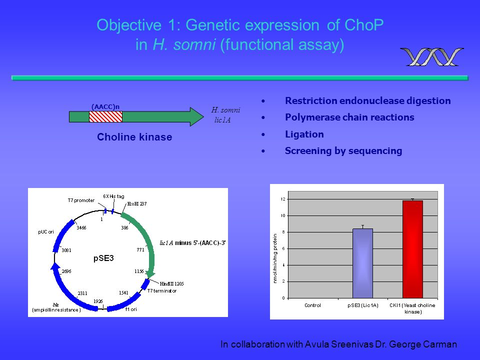 Objective 1: Genetic expression of ChoP in H. somni (functional assay)