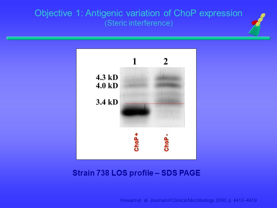 Objective 1: Antigenic variation of ChoP expression (Steric interference)