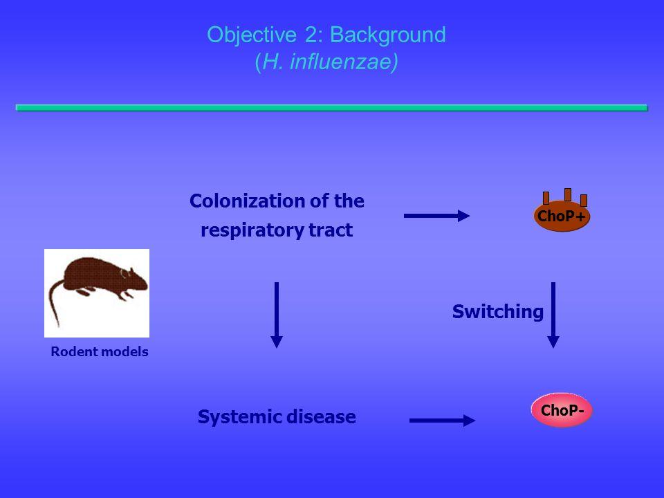Objective 2: Background (H. influenzae)