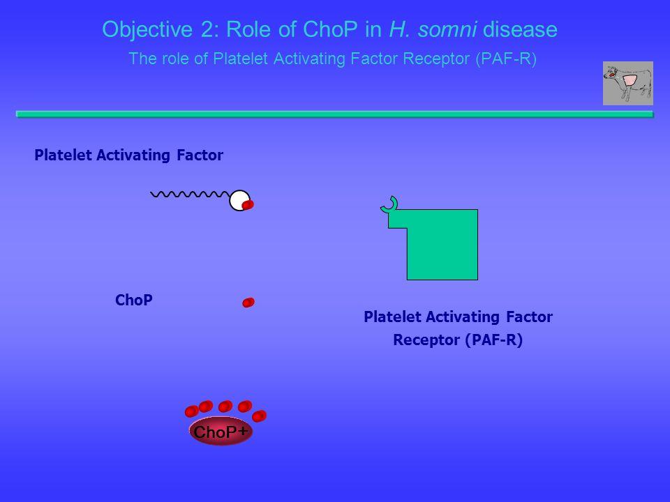 Platelet Activating Factor Platelet Activating Factor Receptor (PAF-R)
