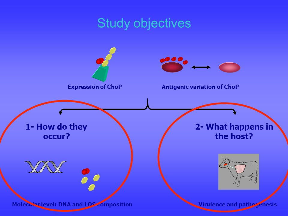 Study objectives 1- How do they occur 2- What happens in the host