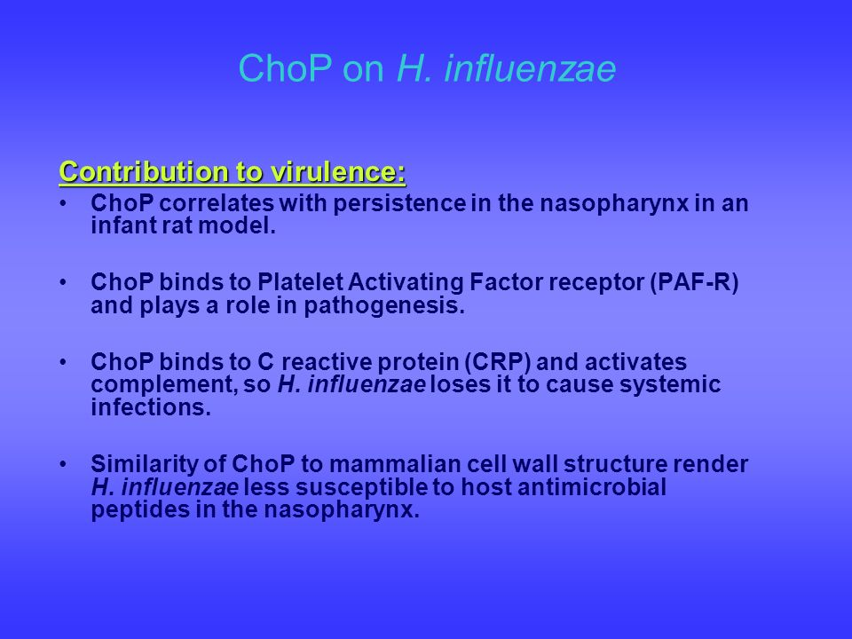 ChoP on H. influenzae Contribution to virulence: