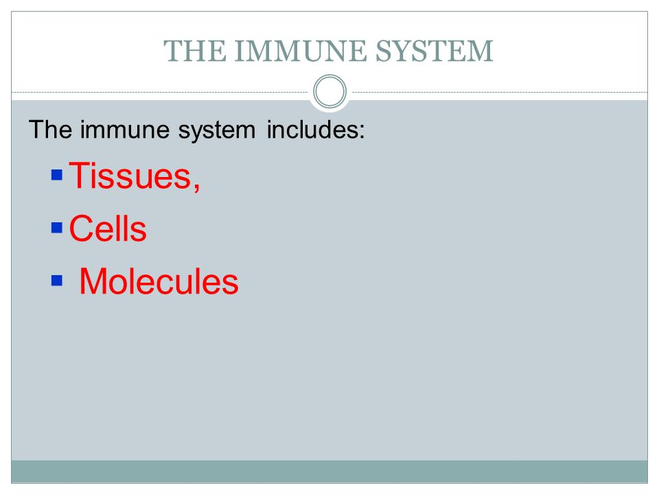 THE IMMUNE SYSTEM The immune system includes: Tissues, Cells Molecules