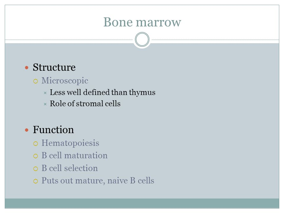 Bone marrow Structure Function Microscopic Hematopoiesis