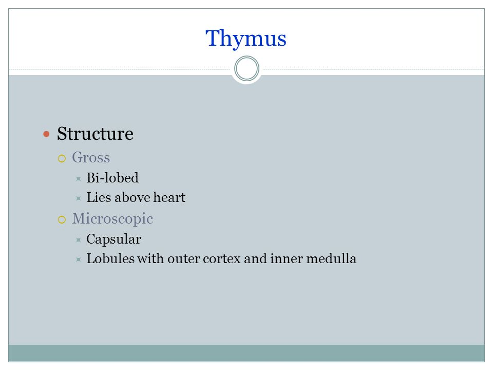 Thymus Structure Gross Microscopic Bi-lobed Lies above heart Capsular