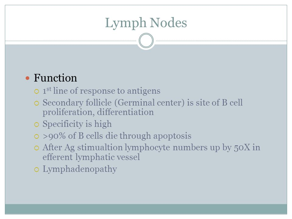 Lymph Nodes Function 1st line of response to antigens