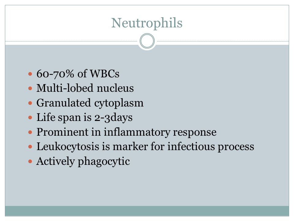 Neutrophils 60-70% of WBCs Multi-lobed nucleus Granulated cytoplasm