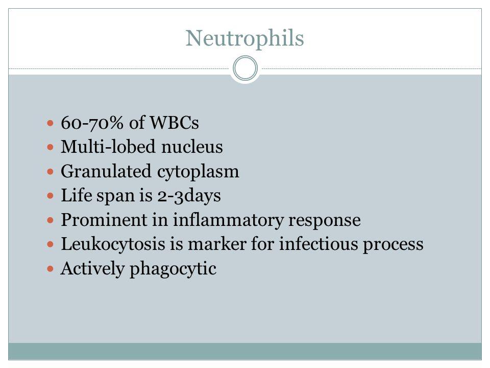 Neutrophils 60-70% of WBCs Multi-lobed nucleus Granulated cytoplasm