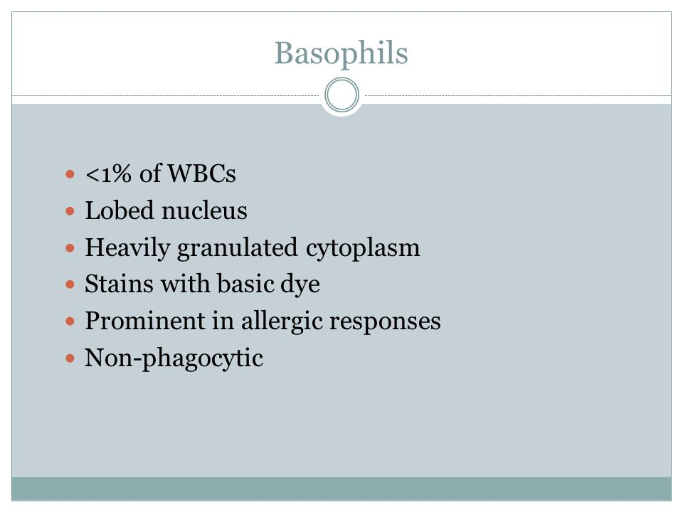 Basophils <1% of WBCs Lobed nucleus Heavily granulated cytoplasm